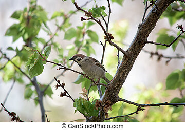 A brown sparrow eating on a tree