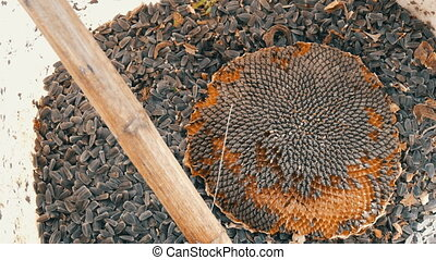 A bucket of sunflower seeds the head of a sunflower and a...