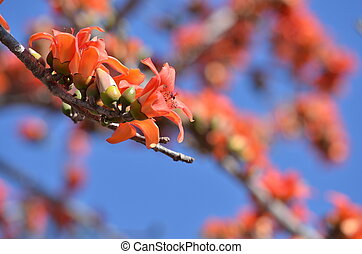A bud of beautiful orange flower petals