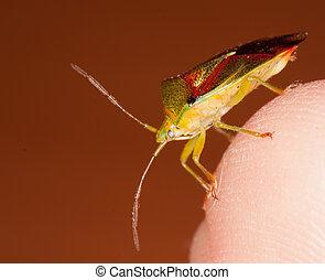 A bug on a finger