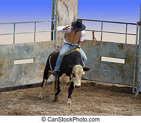 A Bull with Rider Coming out of the Gates