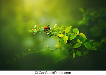 A bumblebee sit on a branch with flower buds and green leaves on a warm summer day. Nature in the forest. A flying insect collects nectar.