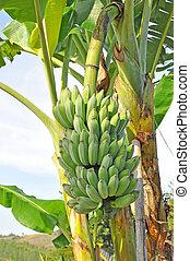 A bunch of bananas