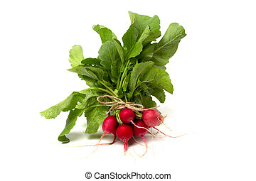 A bunch of fresh pink radishes for salad isolated on a white background.