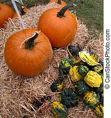 A bunch of gourds and 2 pumpkins