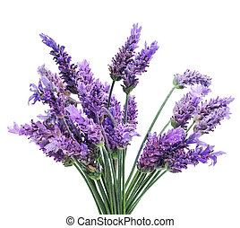 lavender - a bunch of lavender flowers on a white background