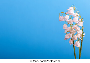 a bunch of lily of the valley on a blue background