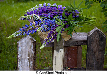 A bunch of lupines in a basket on an old fence against a background of green grass