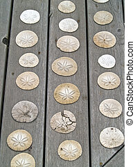A Bunch of Sand Dollars on a Wooden Board