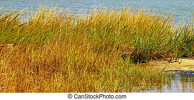 A bunch of Sea Grass growing along the shoreline of a beach at high tide during the summer.