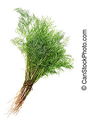 A bunch of simple fresh green dill garden plant isolated