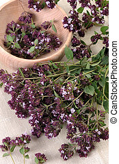 Origan (Origanum vulgare) - A bunch of stems with flowers of...