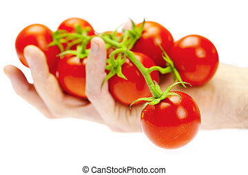 a bunch of tomato in your hand man isolated on white