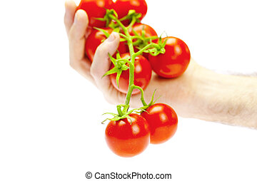 a bunch of tomatoes in hand isolated on white