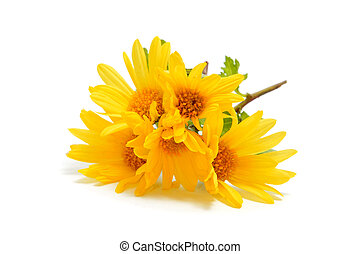 a bunch of yellow daisies isolated on a white background