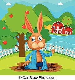 A bunny at the garden
