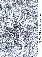 A bush covered in snow.