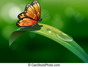 Illustration of a butterfly above a leaf with water drops