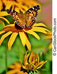 A butterfly feading on a yellow flower