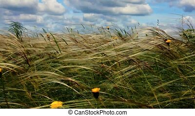 A butterfly flies over a summer field with a feather grass