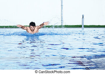 a butterfly hobby swimmer in action