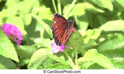 butterfly - a butterfly on a plant