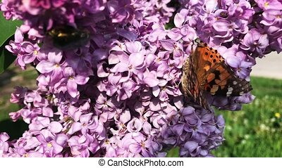A butterfly sits on a lilac flower on a sunny day