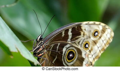 A butterfly with brown white and black spotted wings sticking on the flower in the garden