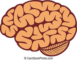 a, cérebro humano