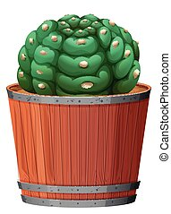 A cactus in the pot