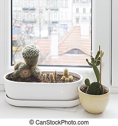 cactus plant in a pot on a white background