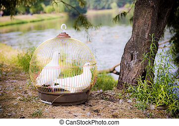 a cage with two doves stands near a tree on the shore of a pond