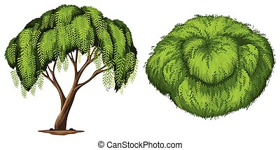 A California Pepper Tree on a white background