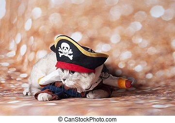 a carribean cat pirate