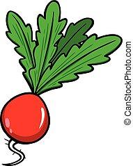 Radish - A cartoon illustration of a garden Radish.