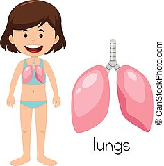 A Cartoon of Human Lung