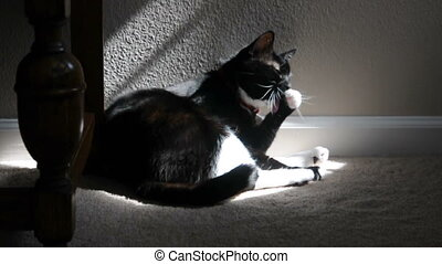 A cat bathes itself in the sun
