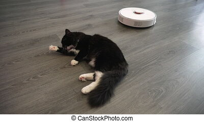 A cat cleans a paw lying on the floor of the living room...