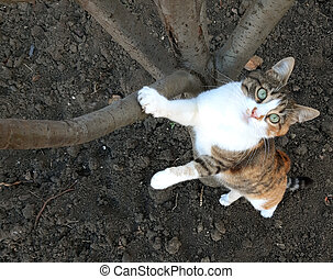 A cat climbs on a tree and looks up