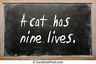 """""""A cat has nine lives"""" written on a blackboard"""