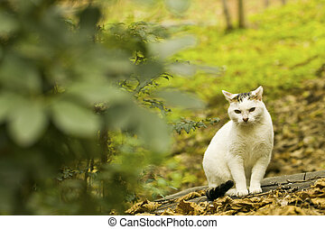 A cat hides in the forest