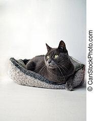 A cat in a basket