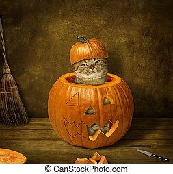 A cat in a pumpkin.