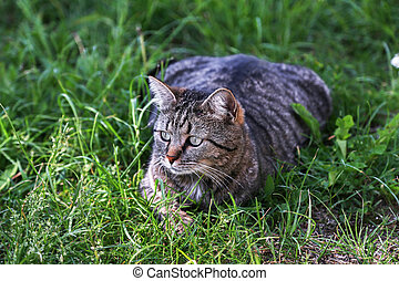 A cat is sitting in the grass