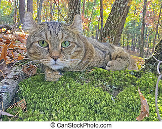 A cat lying on moss in autumn forest.