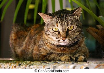 A cat lying on rock