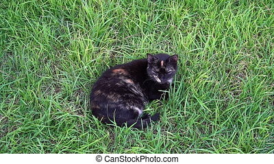 A cat lying on the grass