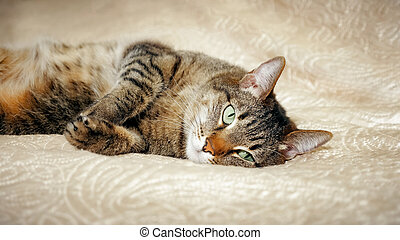 A cat lying on the sofa