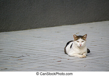 A cat on the ground