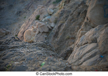 a cat sitting on rock of a mountain